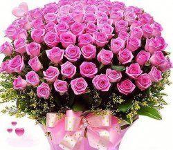 Фото красивих літніх квітів