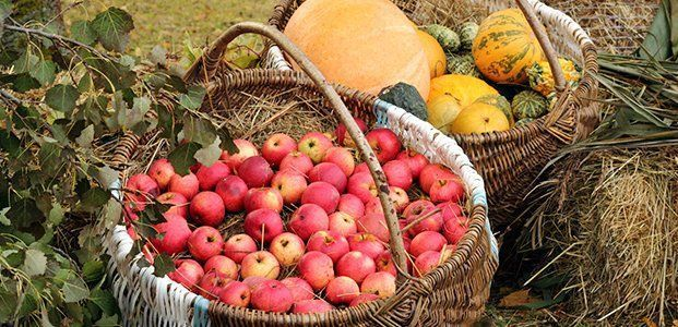 Які вітаміни потрібно пити восени - зміцнюємо здоров`я