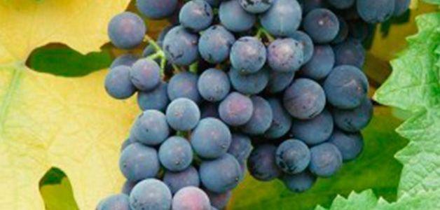 Вітаміни для дітей восени