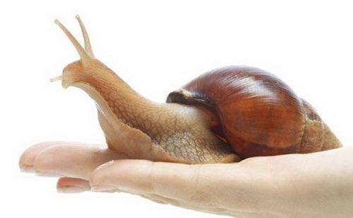 Косметичний масаж обличчя равликами ахатин: опис, рекомендації