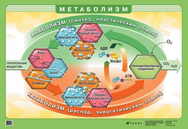 метаболічна дієта