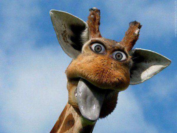 На фото неординарний і позитивний жираф
