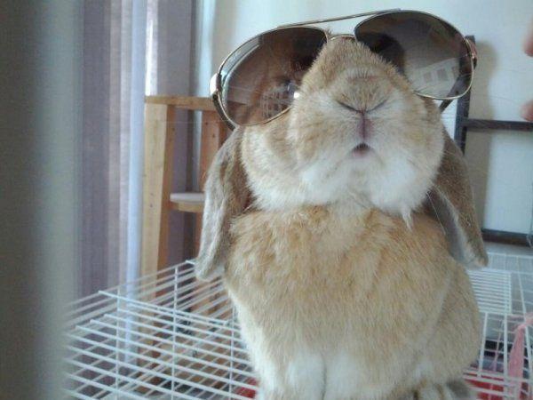 Винахідливий кролик, як на фото, - сама досконалість