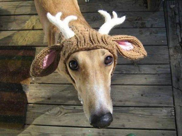 Але фото тварина, яке готове заради тебе на все