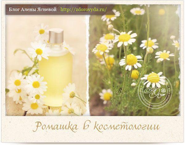 Ромашка аптечна - все про улюблену квітку косметологів